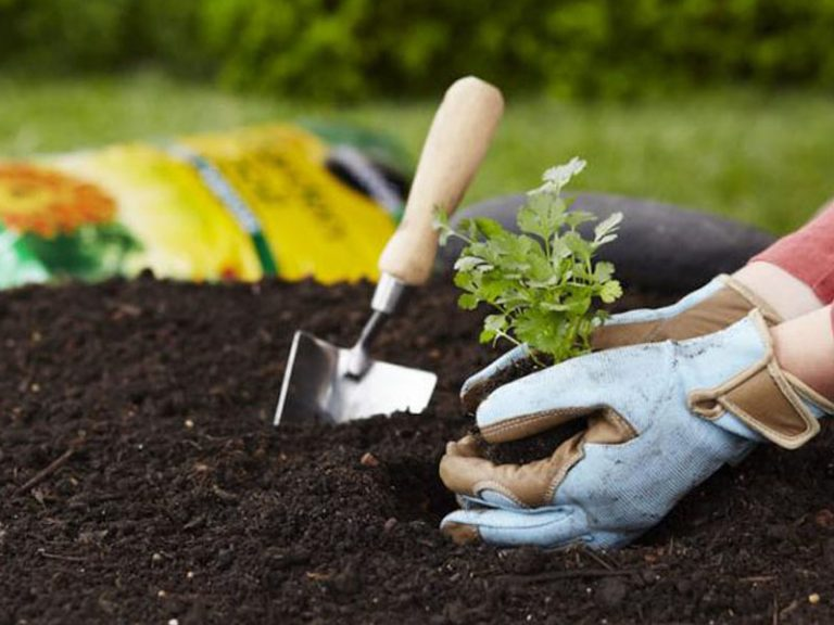 Potting soil for plants and Seeds