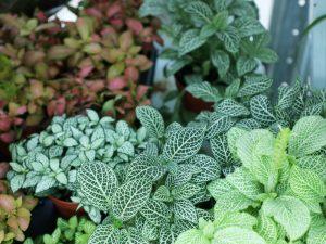 Indoor plants in Dubai Garden Centre
