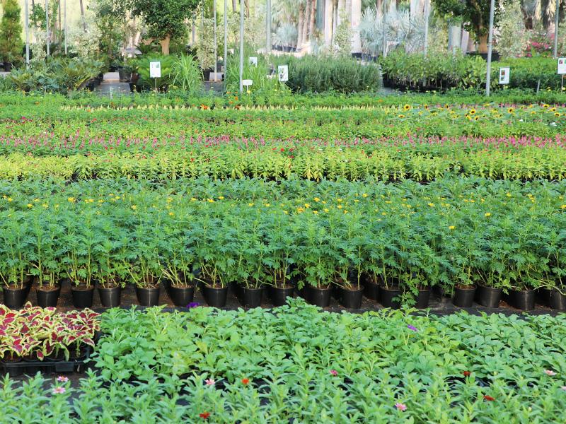 Adaptive plant nursery, Wahat Al Sahraa
