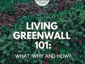 LIVING GREEN WALLS 101: WHAT, WHY AND HOW?