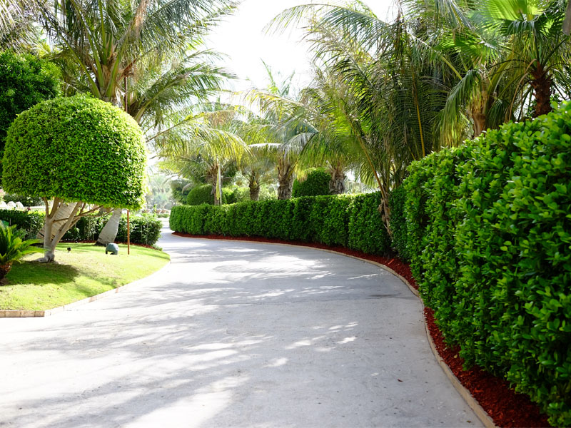 Atlantis the palm landscape maintenance by desert turfcare