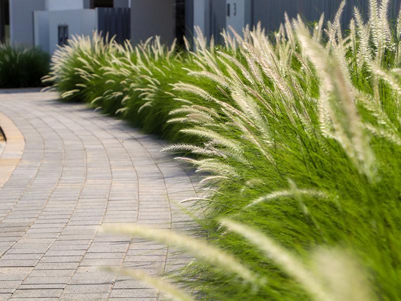 Parkway & Fairway Dubai hills landscape constructed by Desert Landscape